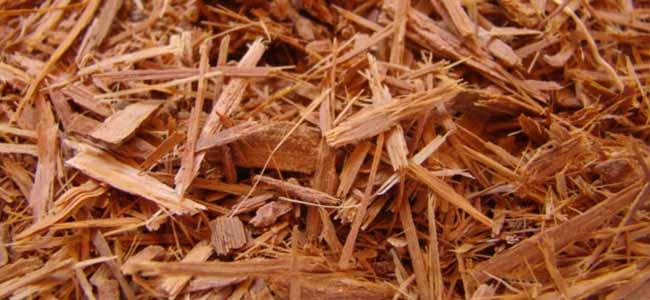 catuaba-bark-extract