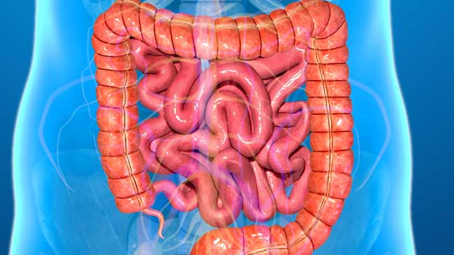 large-intestine